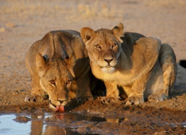 With lions, elephants, Airbnb is going all-in on adventure tours