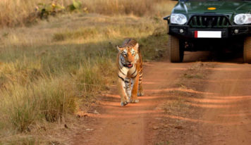 Exploring Jim Corbett National Park—safaris you should take while in the jungle